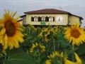 lodge_sunflowers